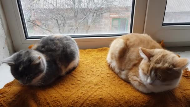 Two cats lie on a windowsill with a warm blanket