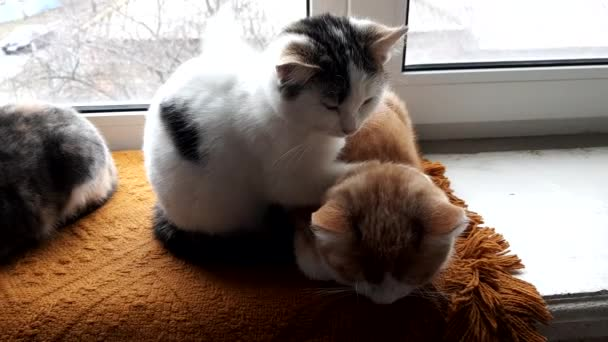 Cute kittens relax a windowsill with a warm blanket