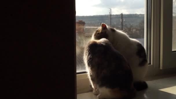 zwei lustige Kätzchen lecken sich abwechselnd, ein Katzenpaar sitzt auf der Fensterbank, Hygiene und Liebe zu Haustieren