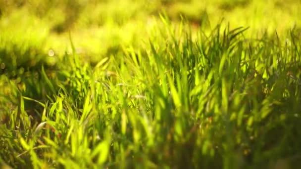 Friss zöld fű mező közelkép.