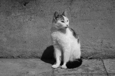 White cat portrait in summer day outdoor, bw photo