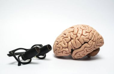 Artificial human brain model and surgical loupe