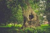 A szűrt fa üreges
