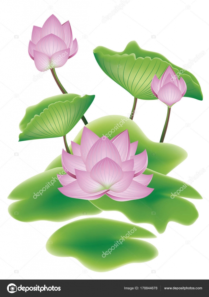 Lotus Flower With Leaves Stock Vector Artshock 178844678