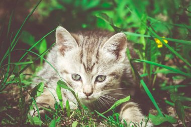 Tabby Kitten Play Outside Retro