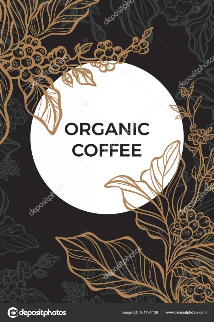 Kaffee-Zweig mit Blättern und Kaffeebohnen. Vorlage. Vektor ...