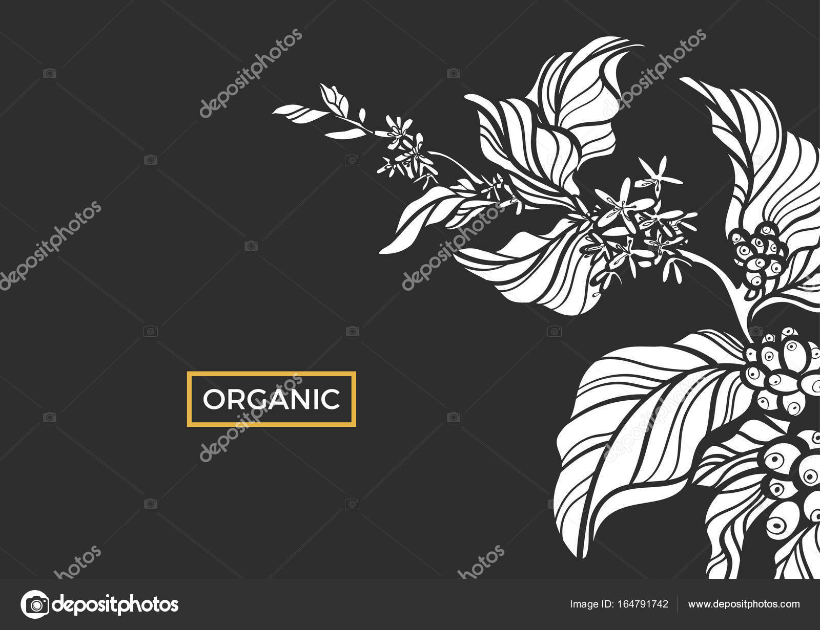 White Branch Of Coffee Tree With Leaves Flowers And Natural