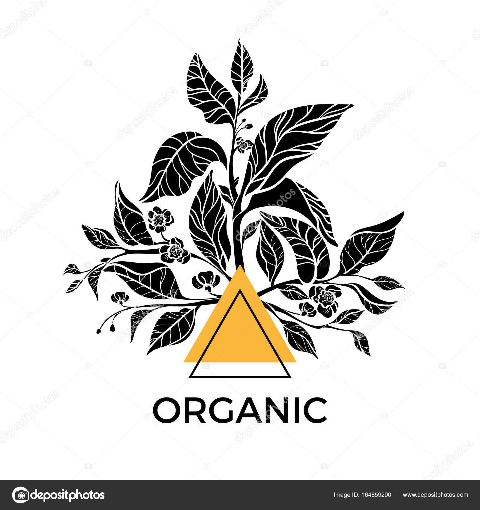 Plantilla de vector de moda. Ramas de té con hojas y flores — Vector ...