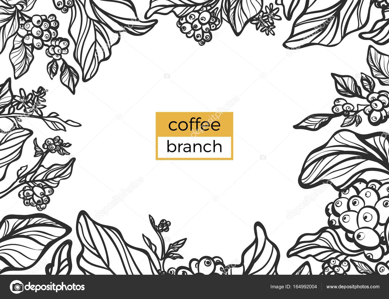 Plantilla de negra rama de cafeto con hojas y granos de café ...