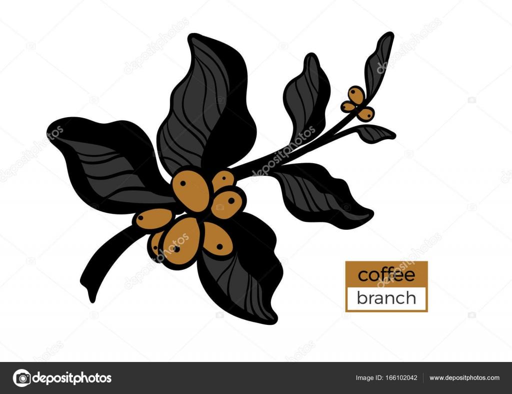 Plantilla de rama color del árbol de café con hojas y granos de café ...