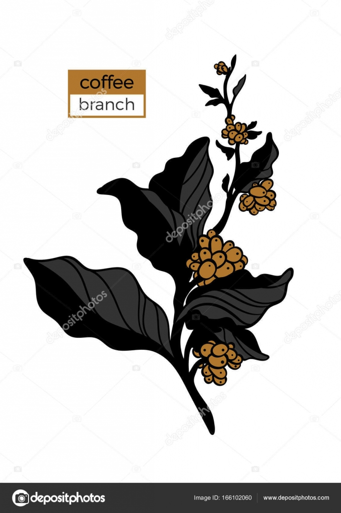 Vorlage der Farbe Zweig der Kaffeebaum mit Blättern und natürliche ...