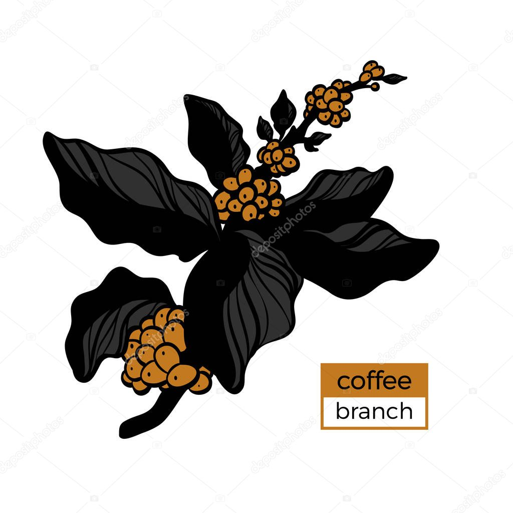 Template of color branch of coffee tree with leaves and natural coffee beans. Vector illustration