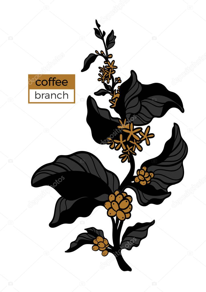 Template of color branch of coffee tree with leaves, flower and natural coffee beans. Vector illustration