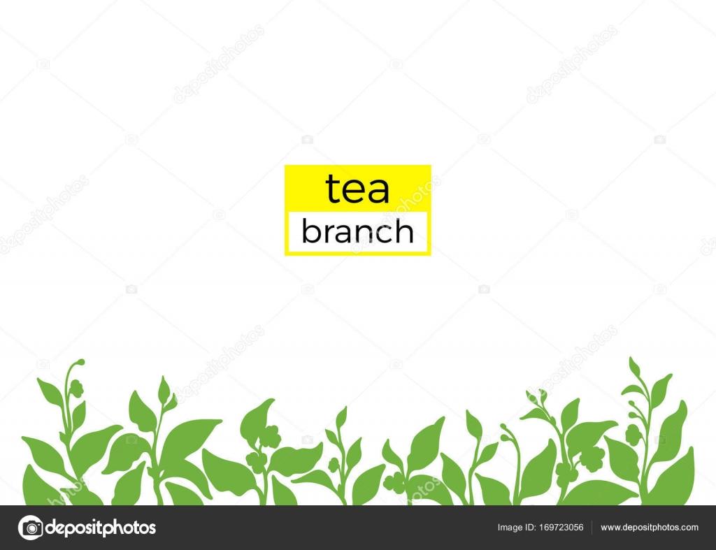 Vorlage der grünen Zweig des Teebusches. Abbildung der Natur. Vektor ...
