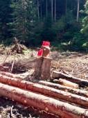 Fotografie Dřevěné kuře v lese