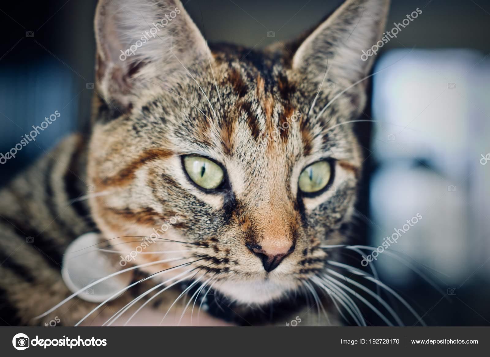 9c50ea91dc51 νέος γάτα στο σπίτι — Φωτογραφία Αρχείου © adriantoday  192728170