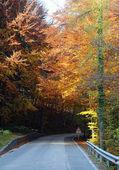 alberi con foglie colorate in autunno in montagna