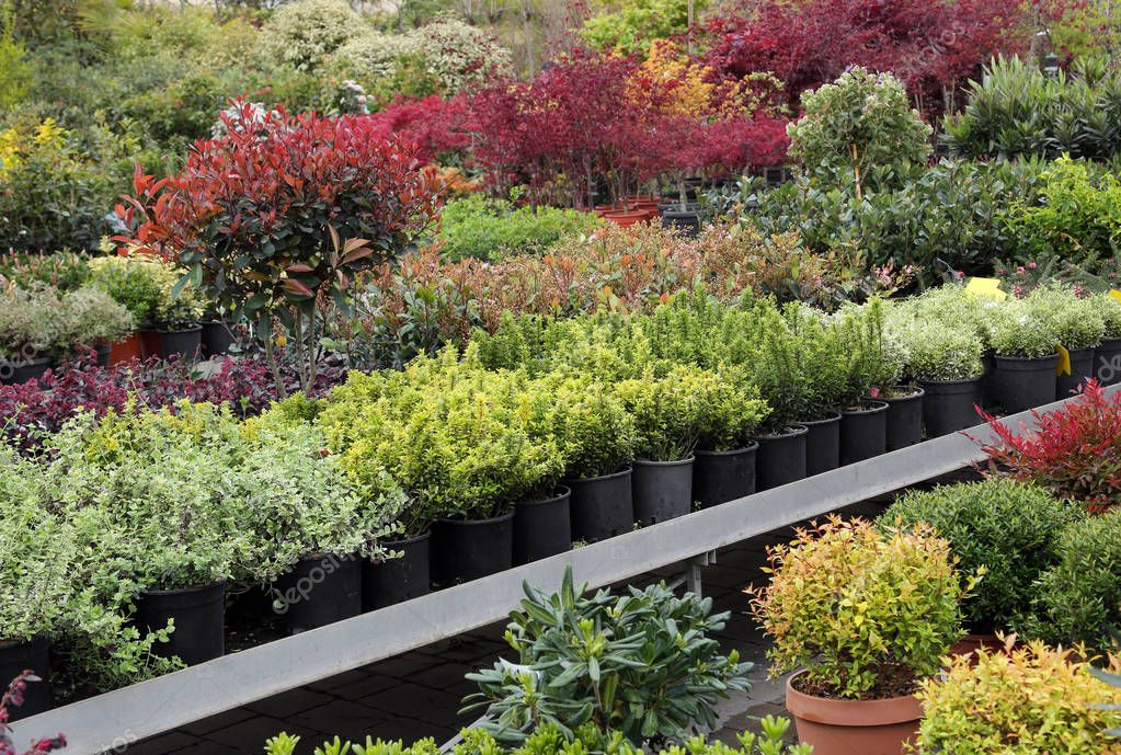 outdoor plants for sale in the greenhouse Florist