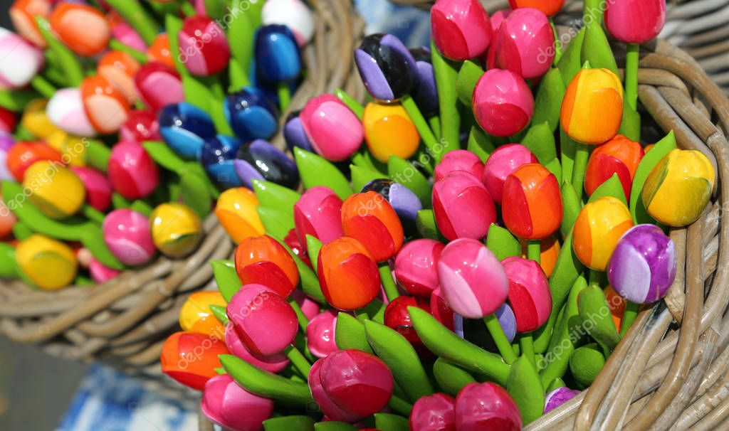 colorful tulips for sale