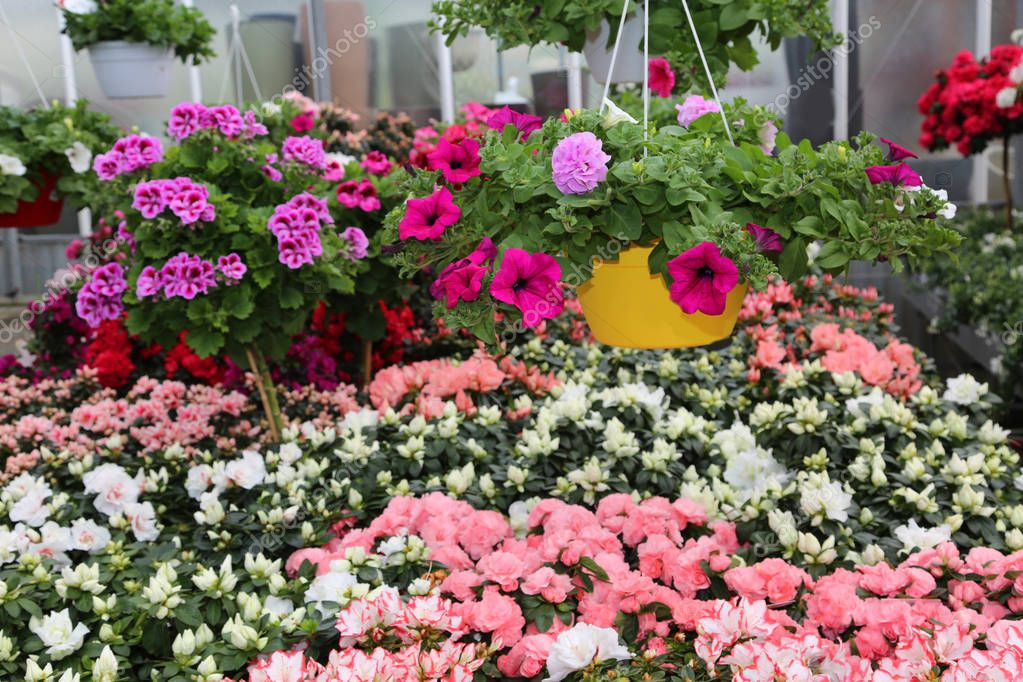 vases of flowers in the large greenhouse Florist