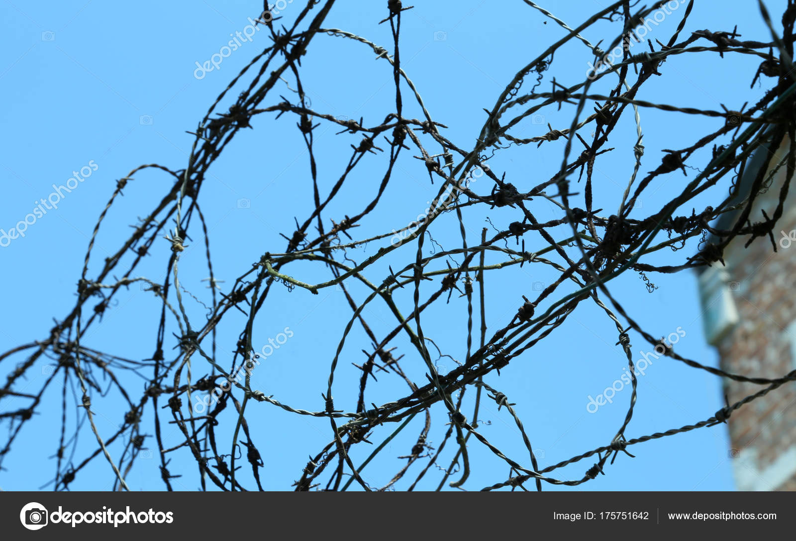 tangle of barbed wire to delimit the area not to be crossed — Stock ...
