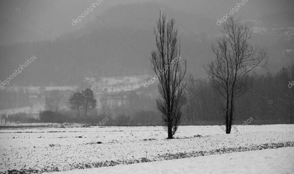 two trees in the middle of the meadow with a bit of snow and bla