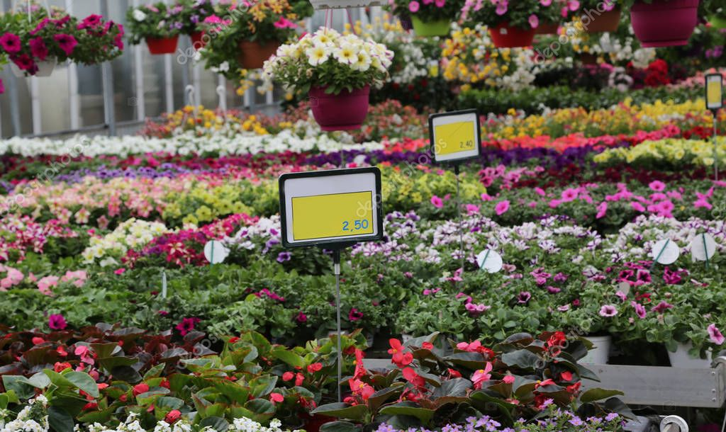 greenhouse in spring with prices of flowering plants for sale