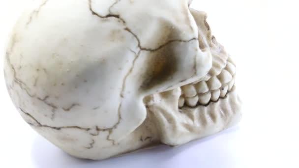 Kopie eines Schädels mit Augenhöhlen und zähneknirschenden Zähnen, der sich auf weißem Hintergrund selbst dreht