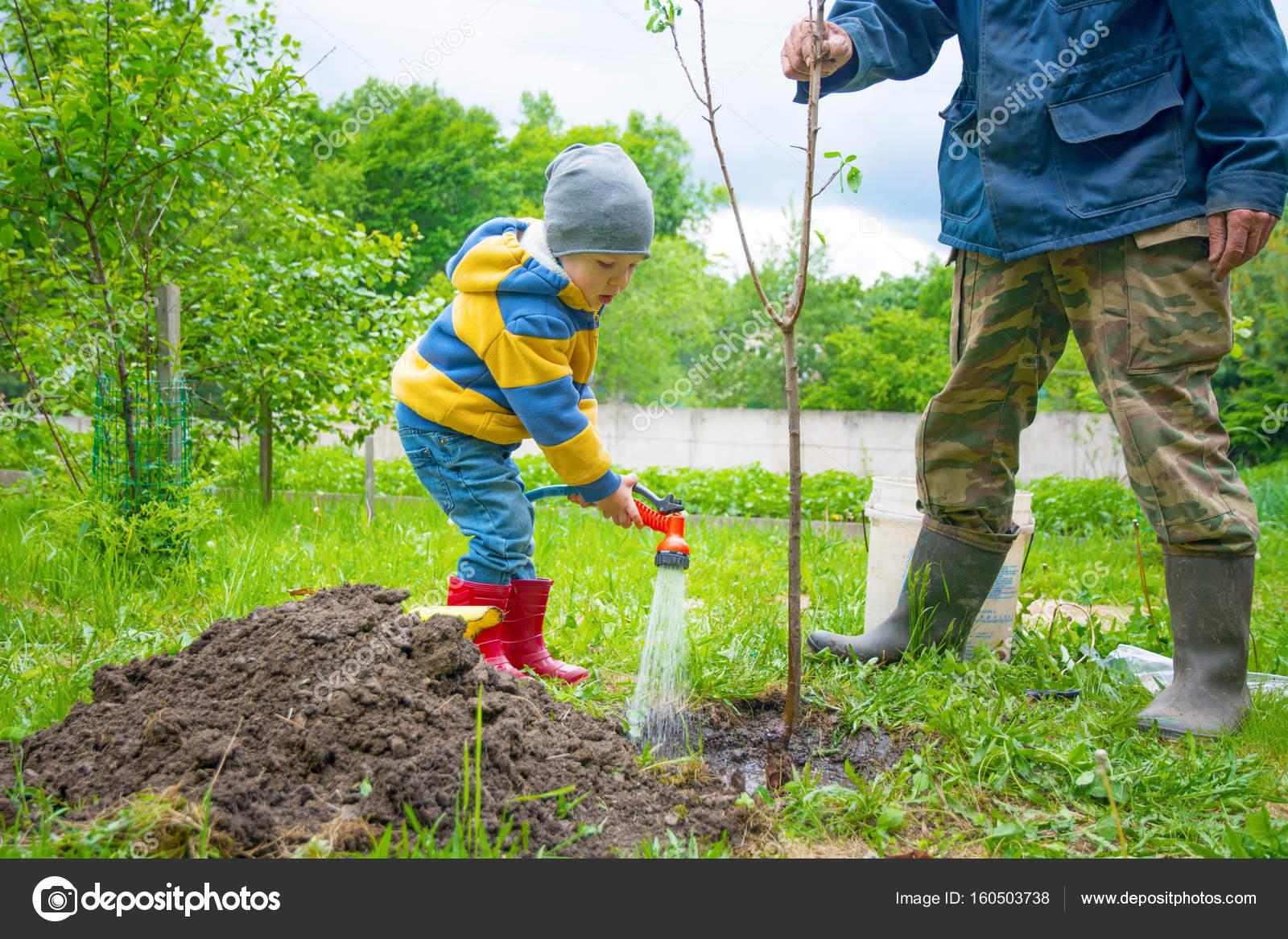 Boom Kleine Tuin : De kleine jongen in de tuin drenken de boom geplant door strengen