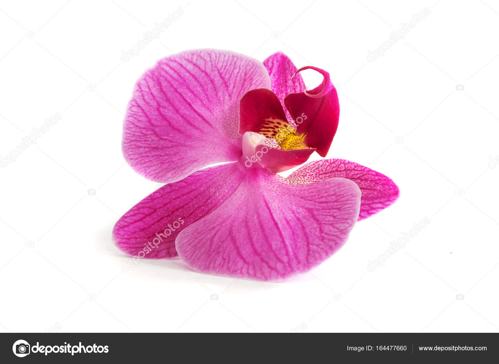 Страсть к орхидеям