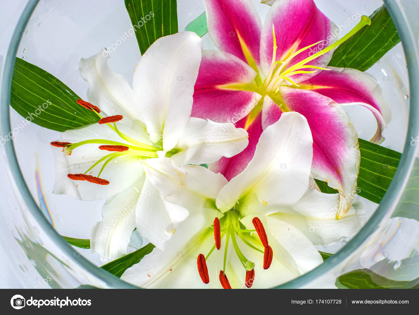 Beautiful large flowers of lilies in a glass on a white background beautiful large flowers of lilies in a glass on a white background isolate photo by juliza03 izmirmasajfo