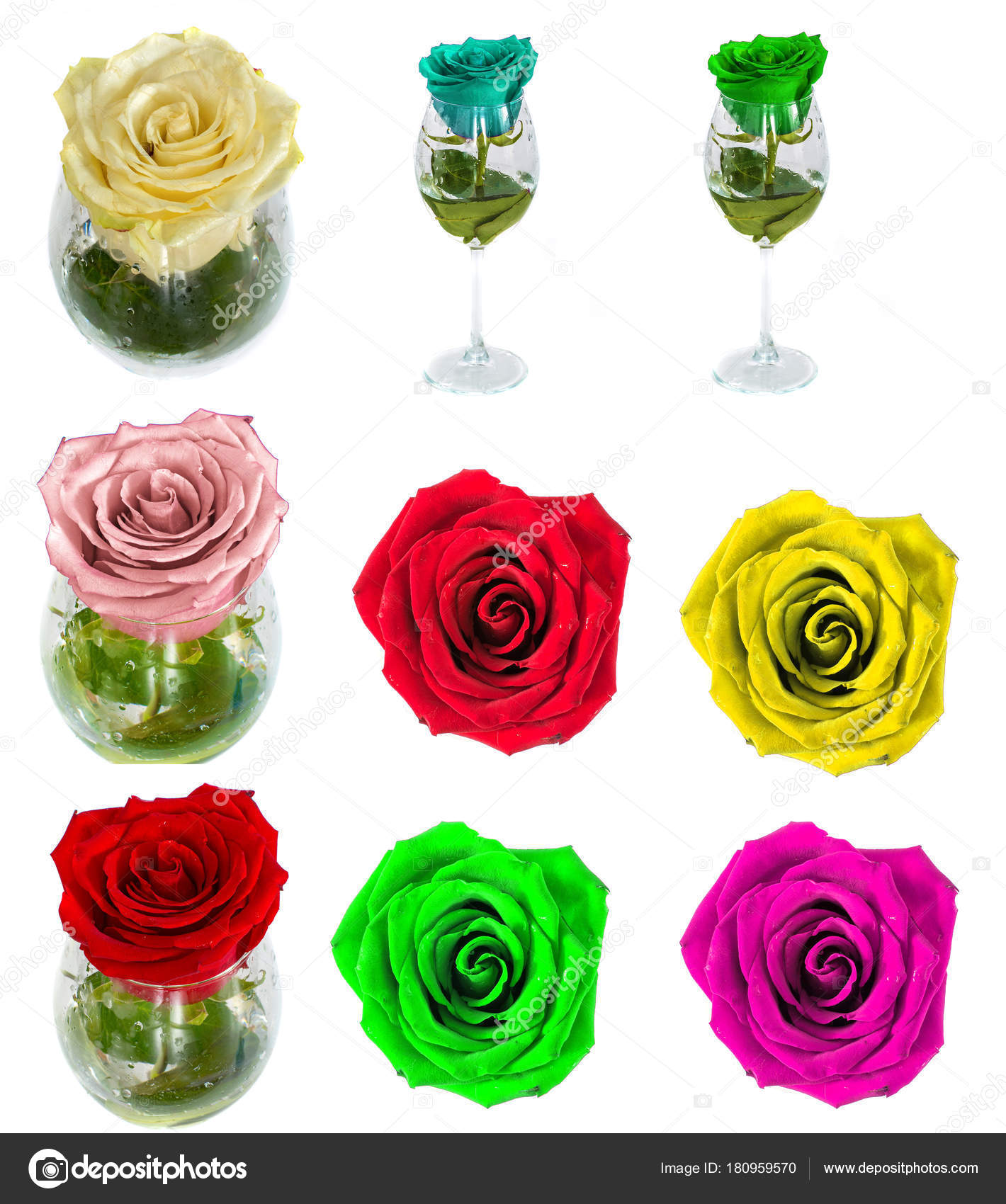 Many Beautiful Roses Without Background Flowers Roses Isolated In