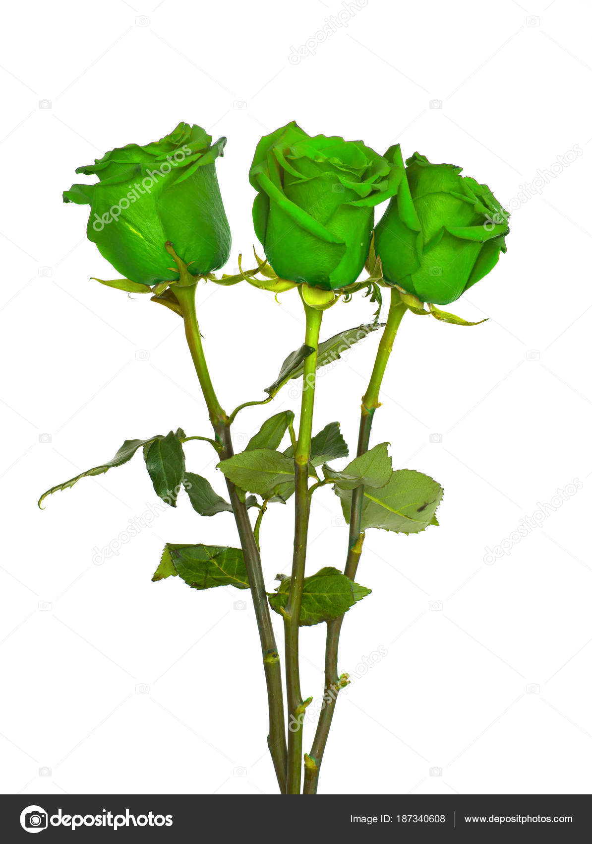 Big Beautiful Bouquet Of Roses Red Blue White And Green Flowers On