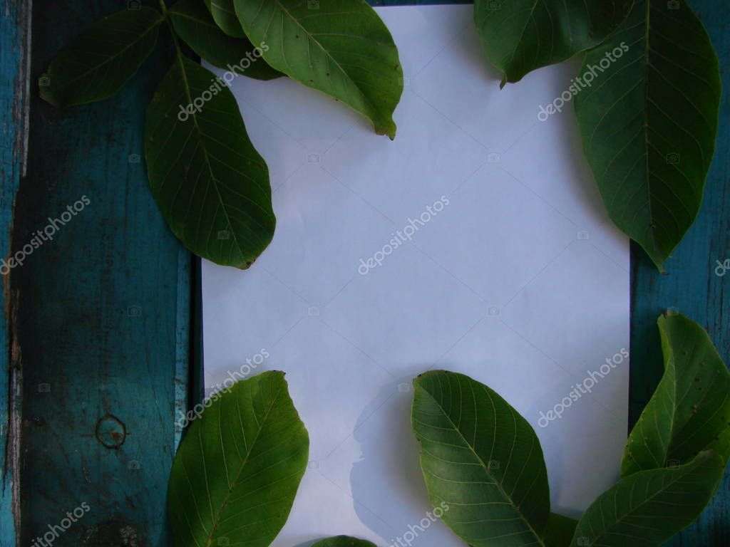 Background for the inscription, frame of green walnut leaves