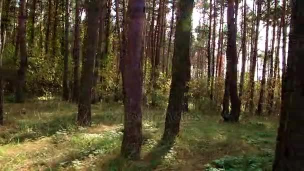 Panorama z podzimního lesa