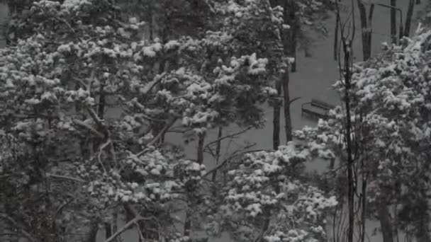 Snow flakes fly in the air. Cloudy gray day. The dark trees in the Park. Urban environment. Tall tree. Winter season. A lonely bench. The snow on the branches. The view from the top. Without man. Slow motion.