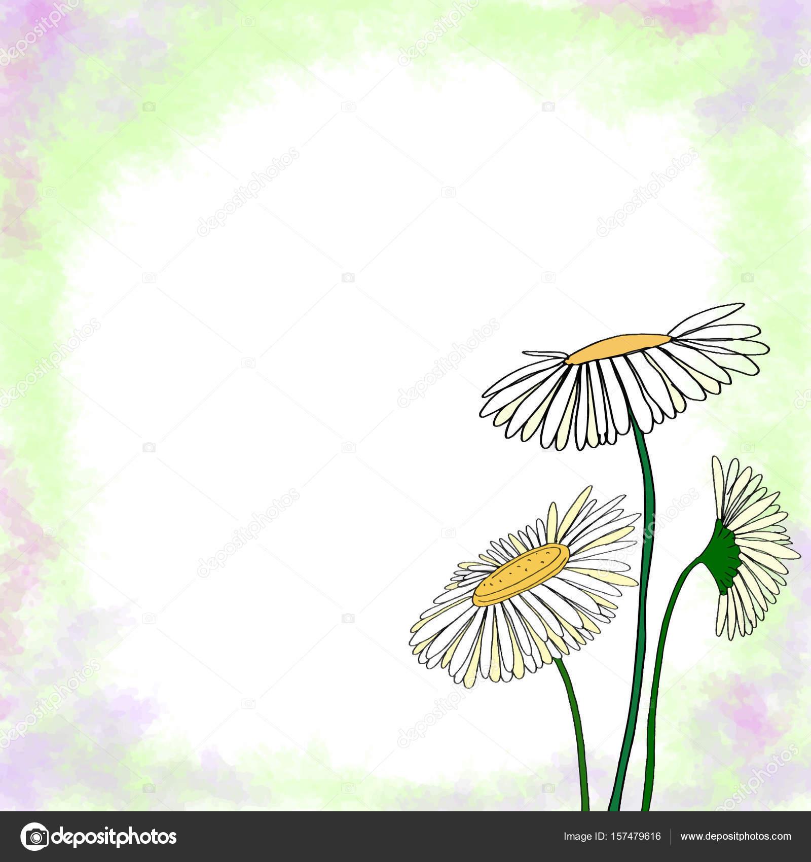 Marco de Margarita y colores de fondo — Fotos de Stock © designartks ...