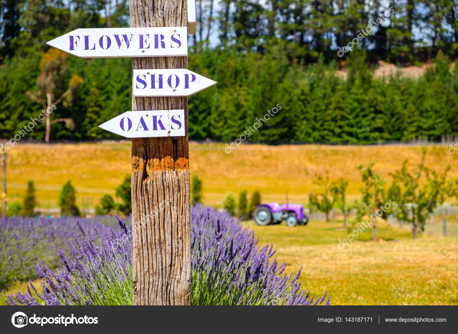 Lavendel Garten Mit Wegweiser Und Traktor Im Hintergrund Stockfoto