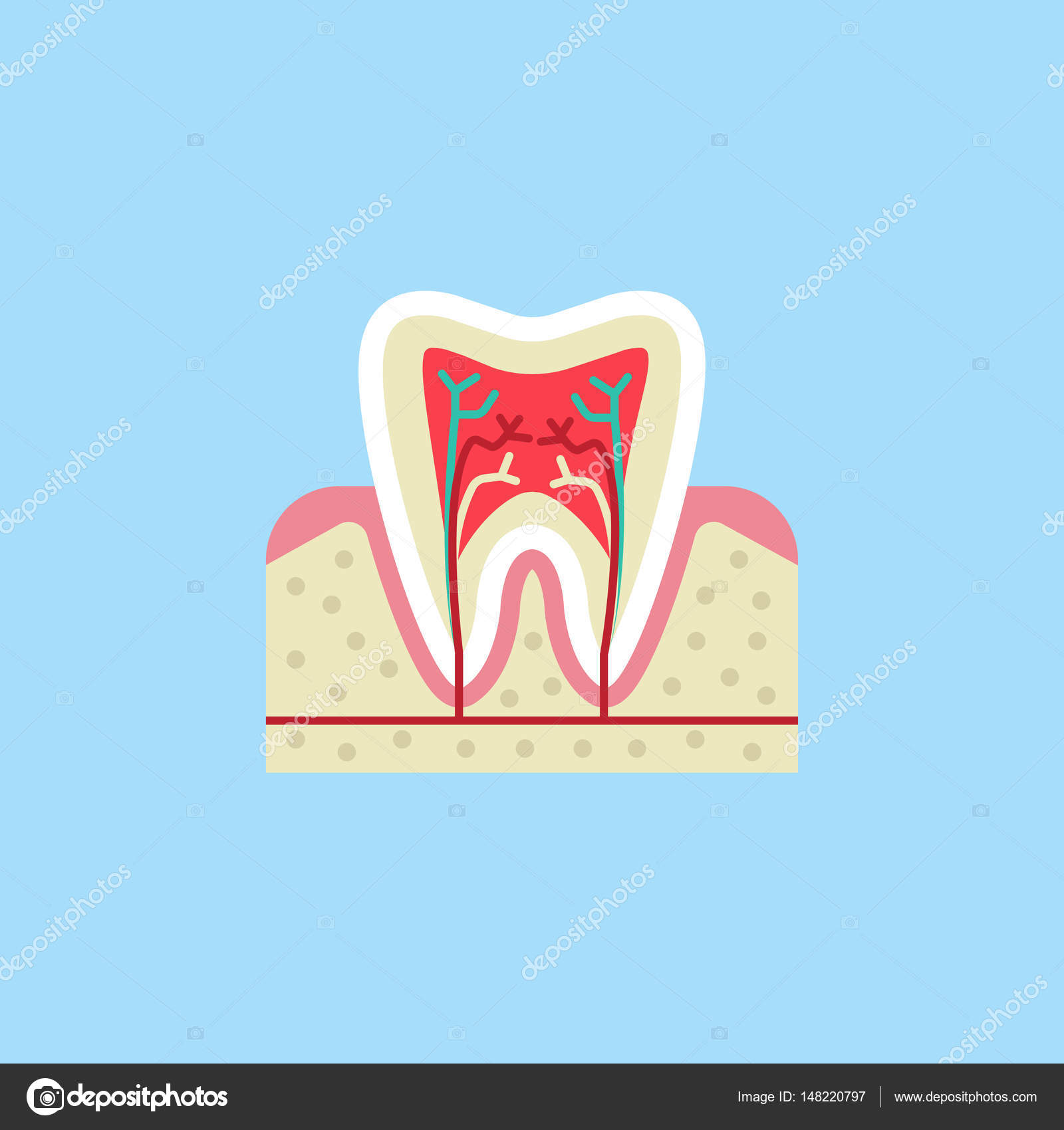 Zahn-Anatomie-flach-Symbol — Stockvektor © amin268 #148220797