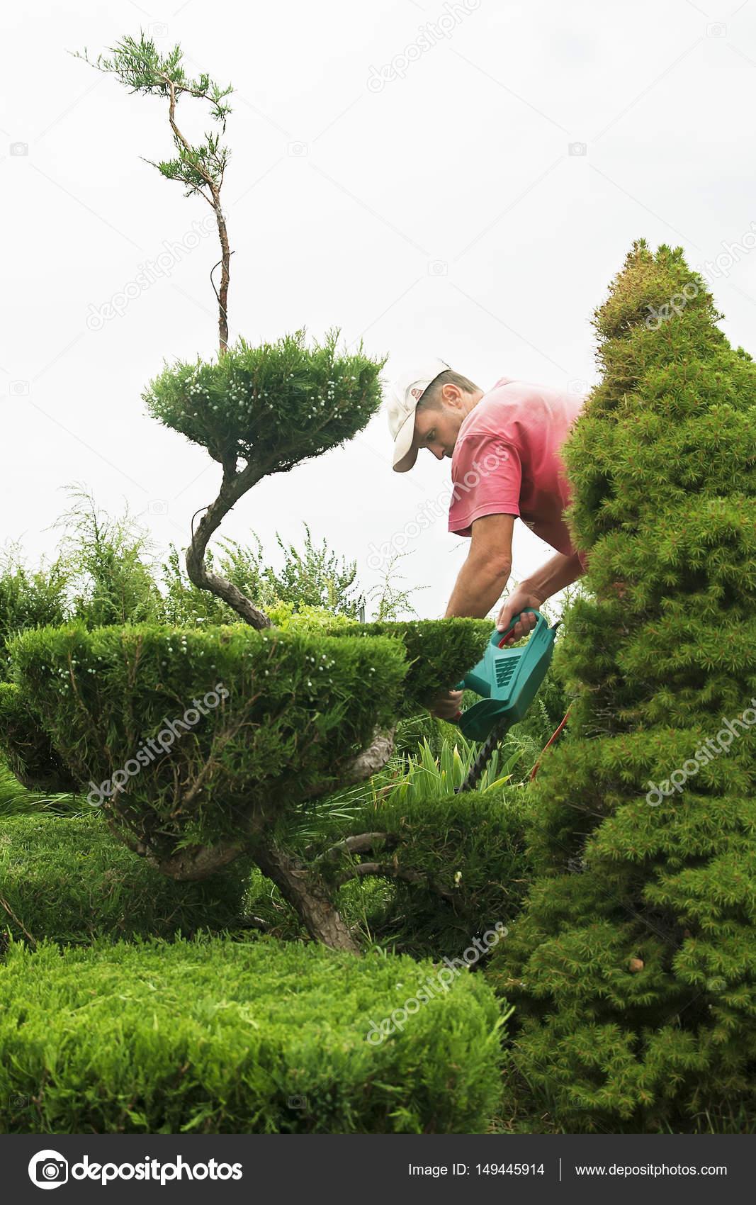 baumschnitt pflanzen hautnah. professionelle gärtner beschneiden