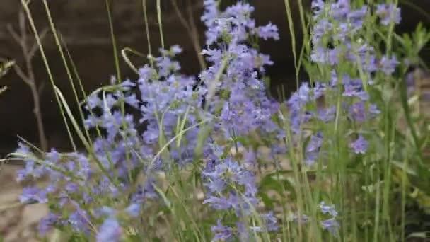 Fialové květy v lesní krajině