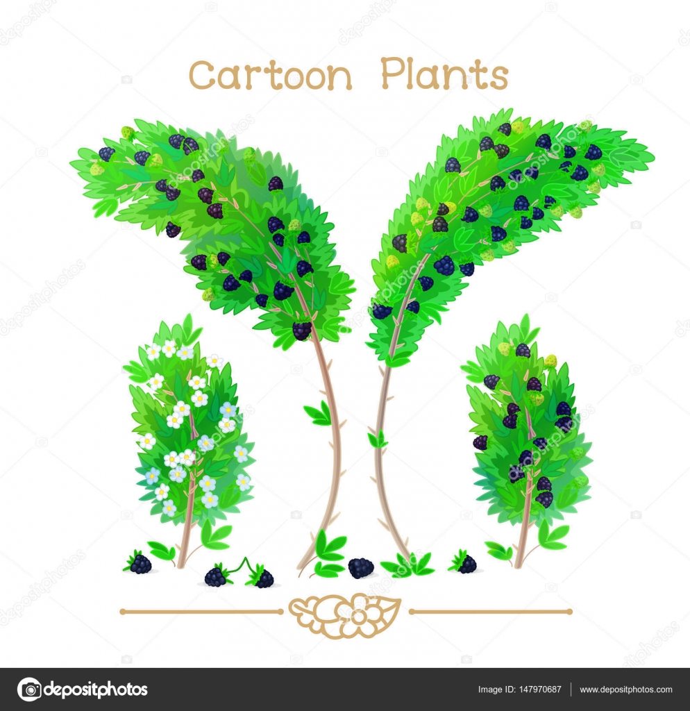 Plantae series cartoon plants: blackberry — Stock Vector