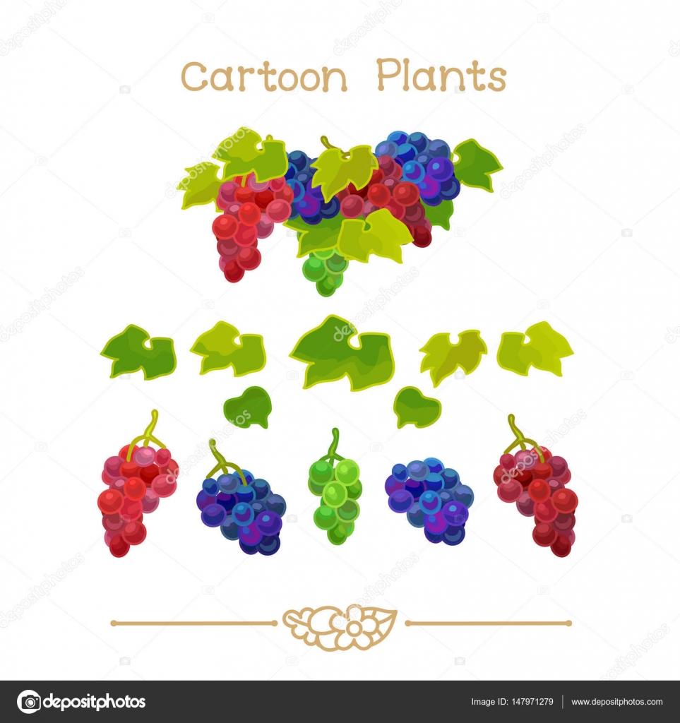 Plantae Serial Animowany Roślin Grapevine Klastrów Z