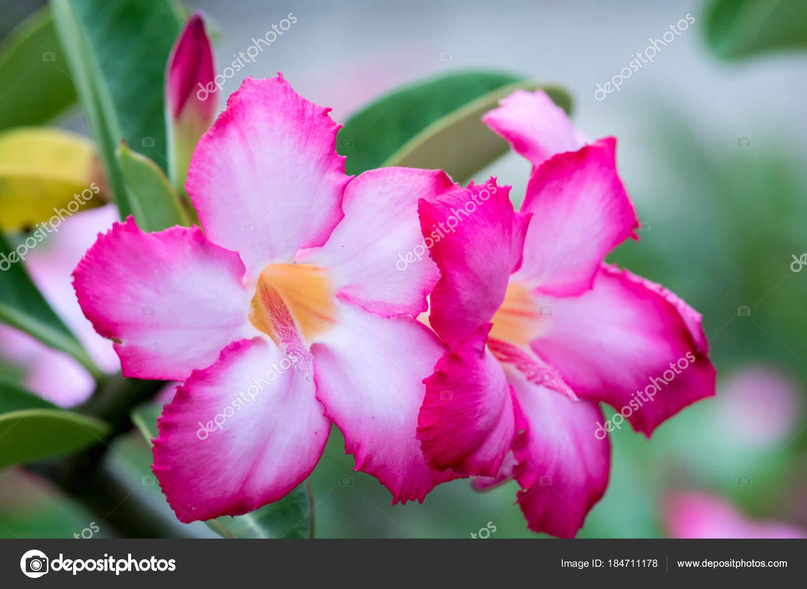 Amazing Beautiful Flowers Background Stock Photo Totookhotmail