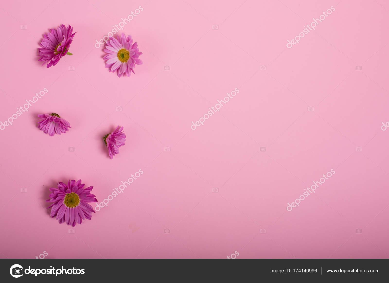 Fiori Su Sfondo Rosa Foto Stock Tinatin1 174140996
