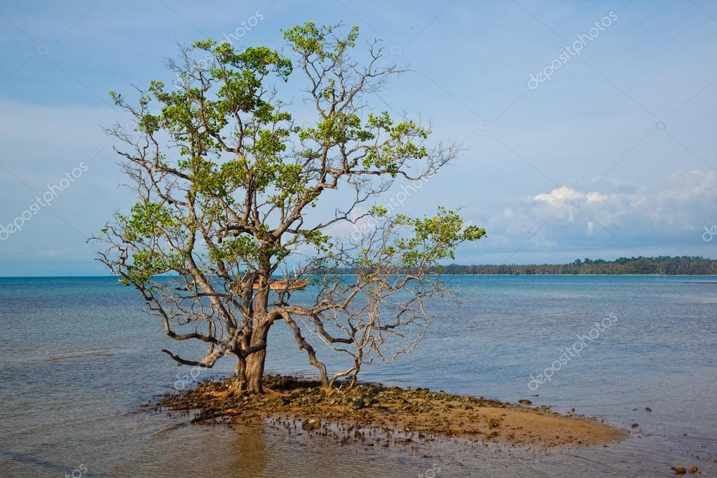 Lonely tree in the sea