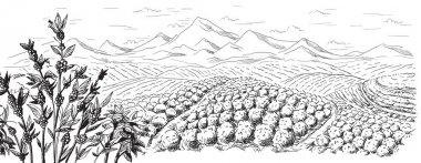 coffee plantation landscape