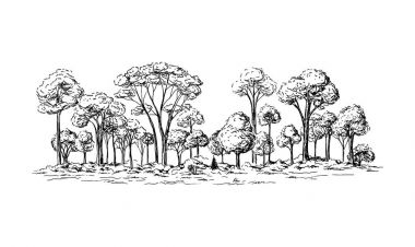 panoramic view of the forest from deciduous trees