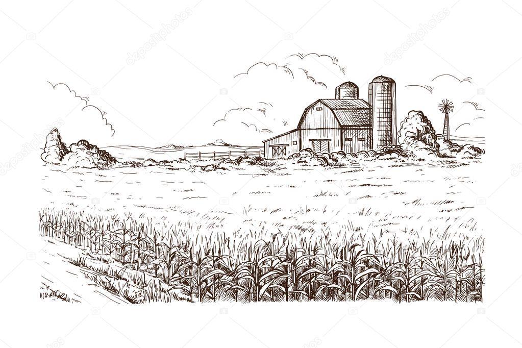 illustration of cornfield grain stalk sketch