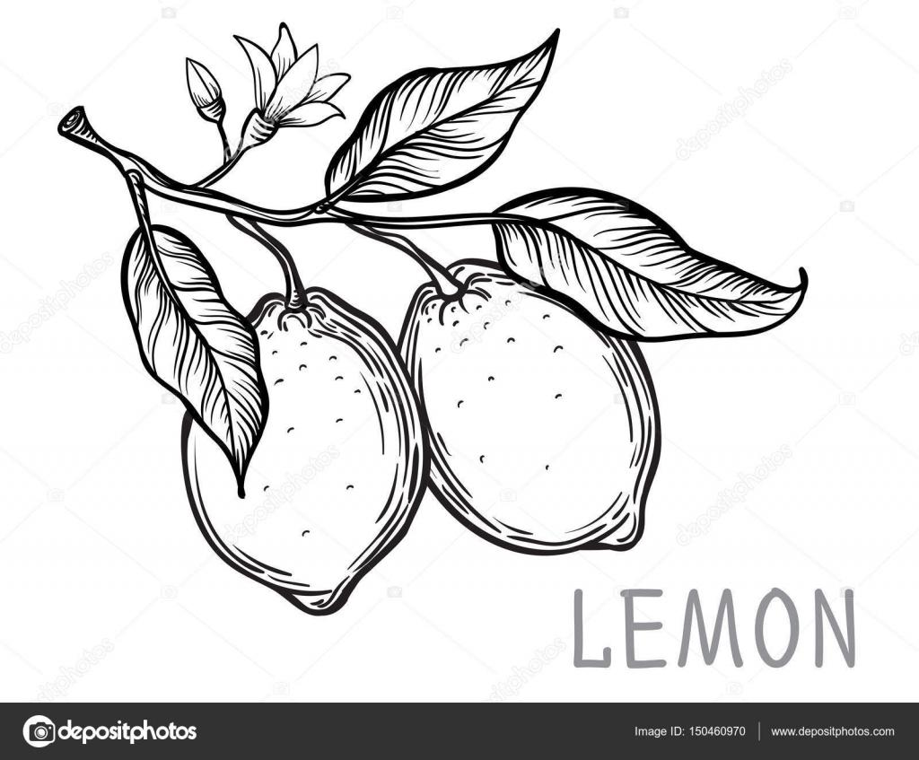 Vintage lemon tree sketch stock vector vectorgoodsail vintage lemon tree sketch vector hand drawn illustration vector by vectorgoodsail thecheapjerseys Gallery